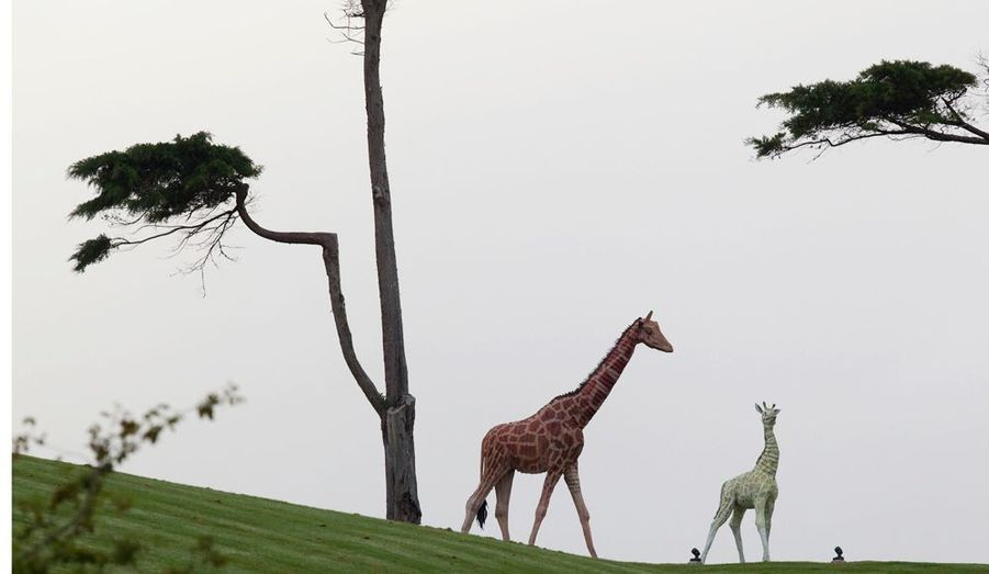 Connu pour ses extravagances de nouveaux riches, Kim Dotcom avait deux magnifiques statues de girafes dans son jardin.