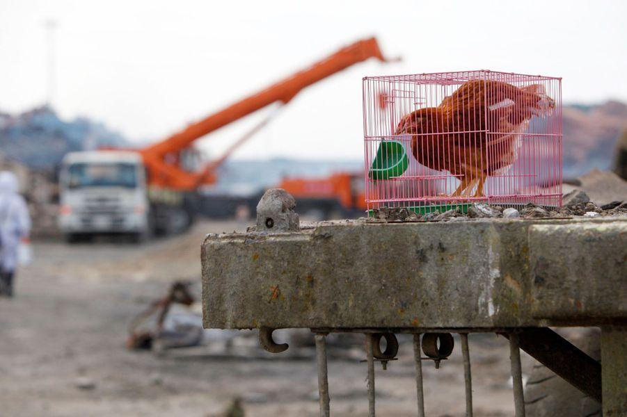 L'opération de nettoyage se poursuit à Tianjin