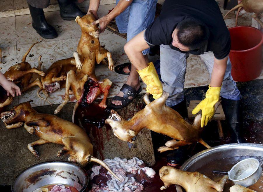 Le massacre de chiens a bien eu lieu