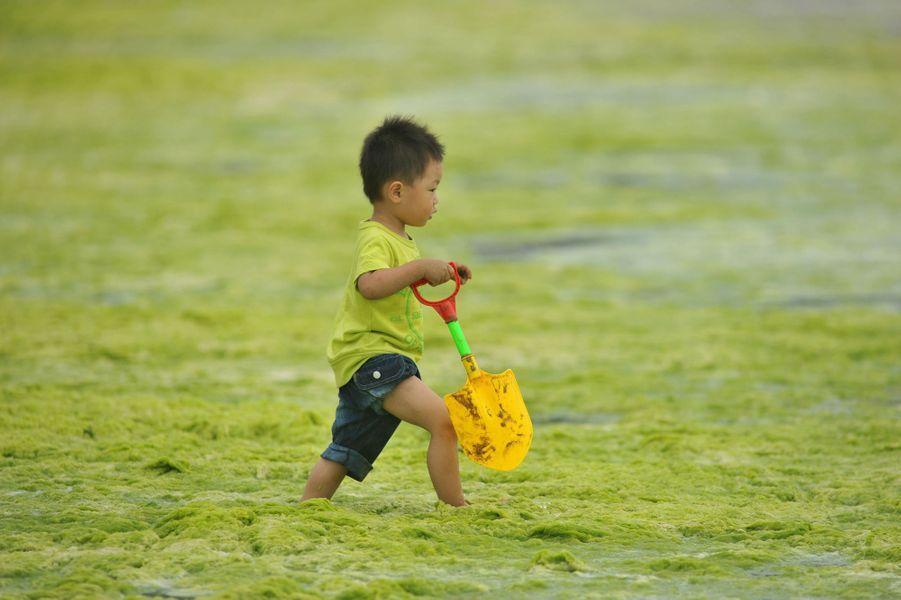 Une plage de Qingdao, en Chine, est recouverte d'algues