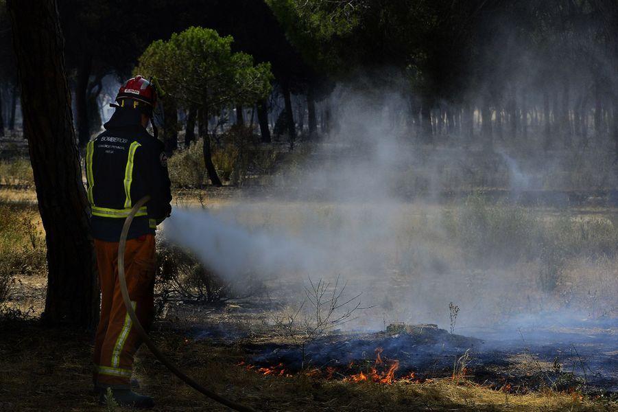 """L'incendie, qui s'était déclaré samedi à Moguer """"est entré dans les limites de l'espace naturel de Doñana"""" dimanche"""