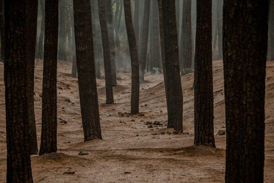 Depuis un mois, plus de 13 052 hectares de végétation ont été détruits.