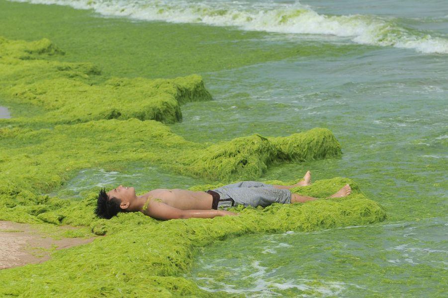 Les baigneurs parmi les algues vertes à Qingdao, en Chine.