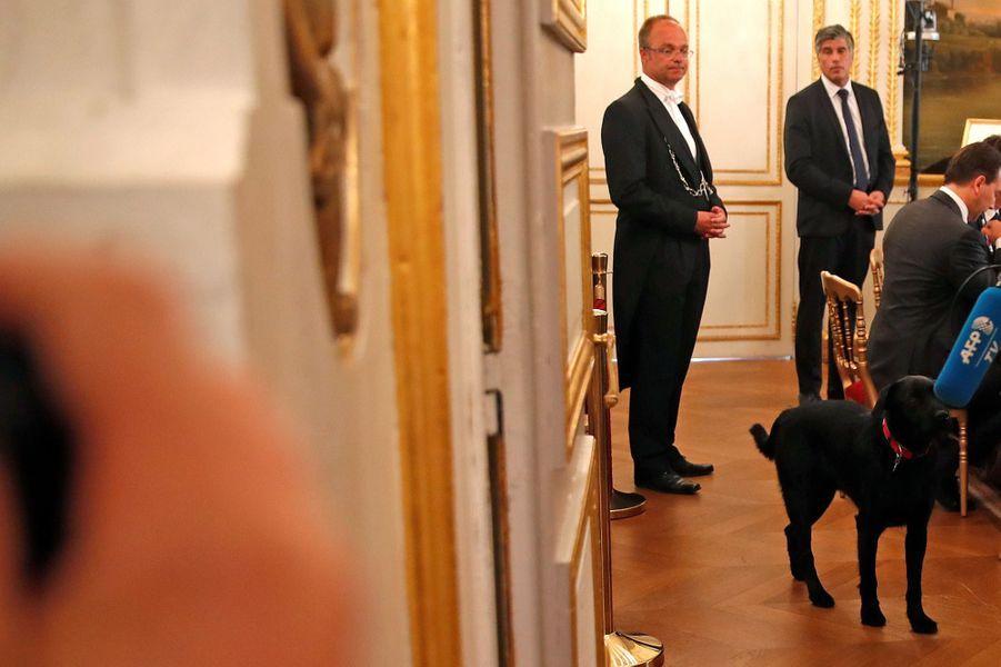 Nemo, le chien d'Emmanuel et Brigitte Macron, lors du séminaire gouvernemental.