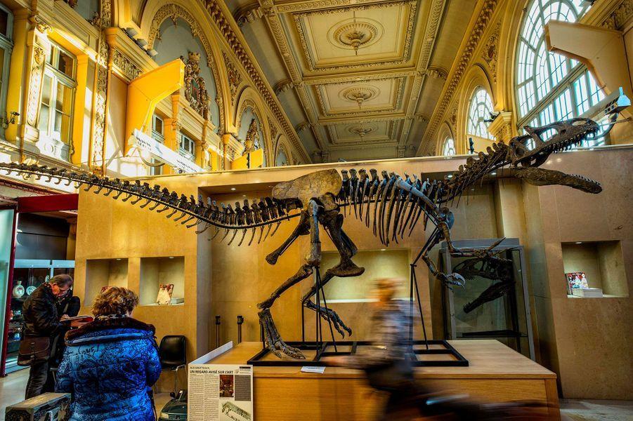 Le squelette de Kan, l'Allosaurus
