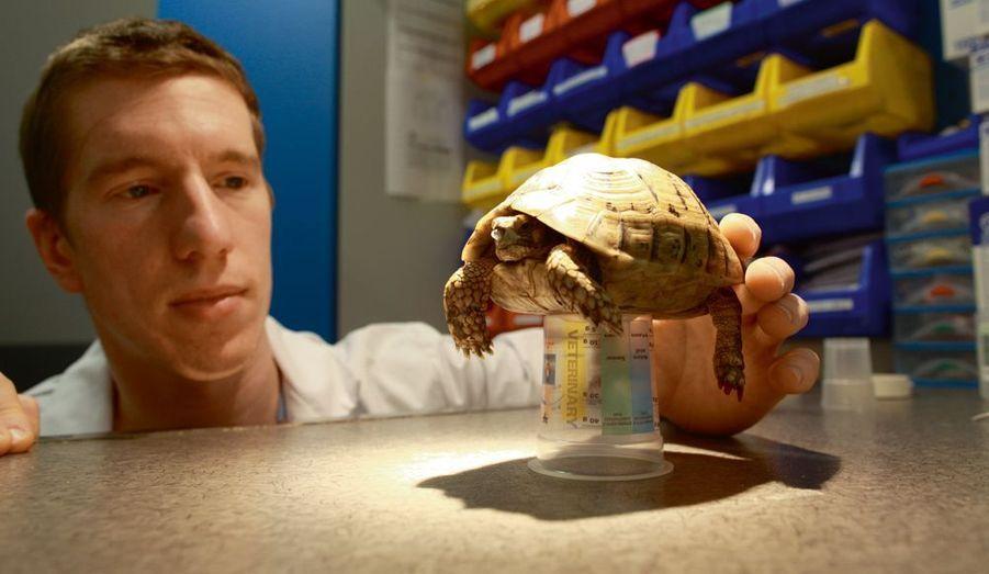 Toupette, 10 ans, a la goutte au nez. Le Dr Charly Pignon va la mettre sous antibiotiques et sous lampe chauffante.