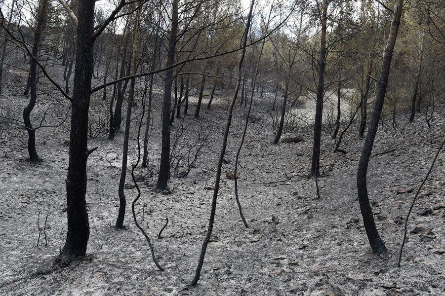 150 hectares sont partis en fumée jeudi à Chateauneuf-les-Martigues
