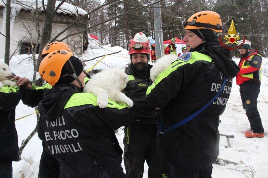 Trois chiots ont été sauvés des décombres de l'hôtel dévasté par une avalanche, en Italie.