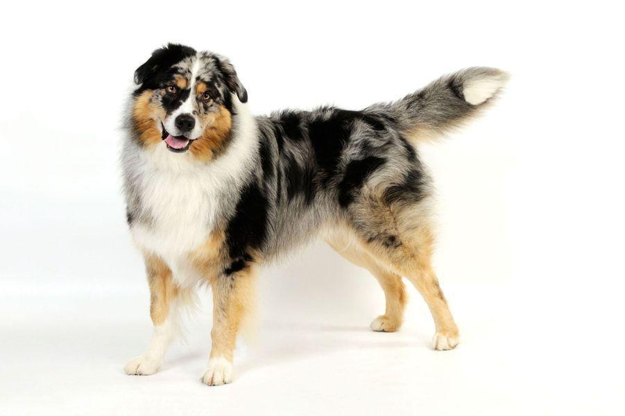 Bevorzugt Les 50 plus beaux chiens du monde en photos VS96
