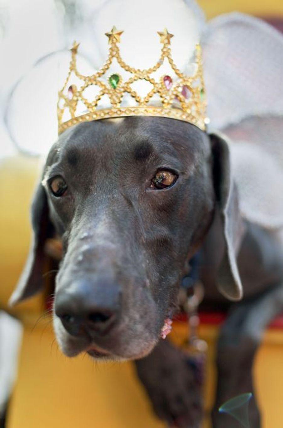 A la Nouvelle-Orléans, le Mardi gras des chiens