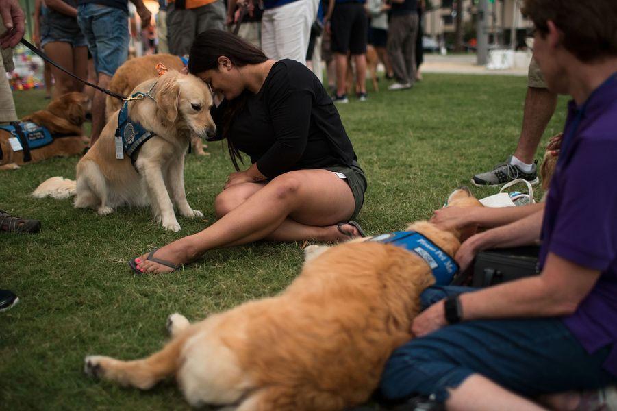 A Orlando, des chiens pour consoler après l'attentat.