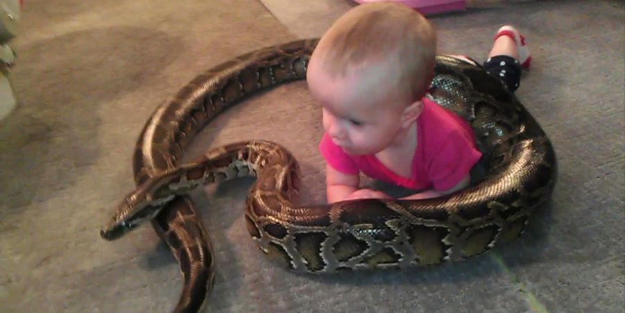 Alyssa et Nay-Nay le python, amis de longue date