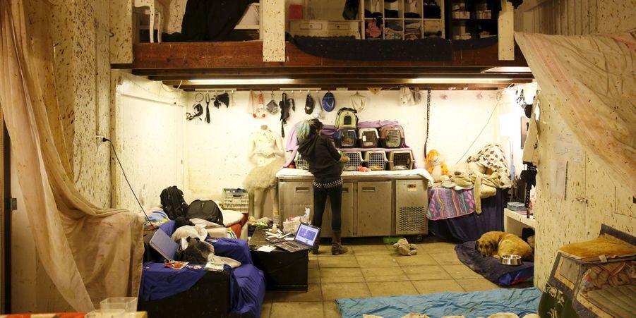 Nora Lifschitz aide les chauve-souris blessées dans son appartement de Tel Aviv