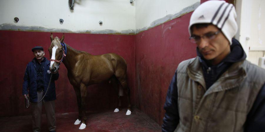 La clinique située au centre équestre Veliefendi, à Istanbul