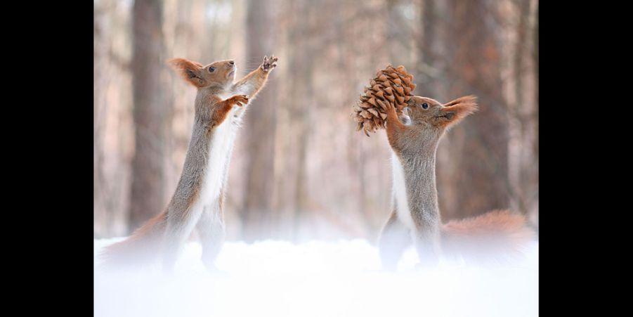 Bataille au sommet entre ces deux écureuils