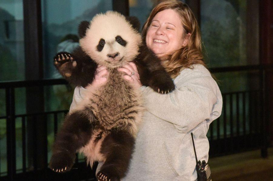 Bei Bei le panda rencontre la presse