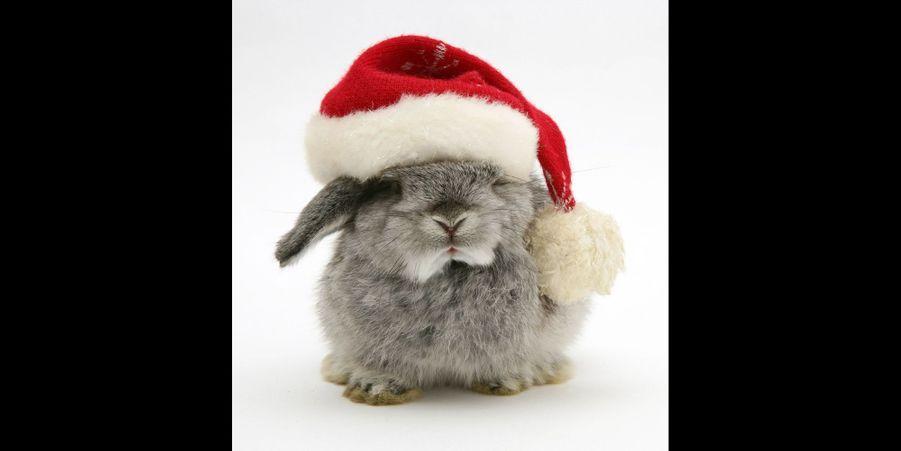 Chiens, chats et lapins aux couleurs de Noël