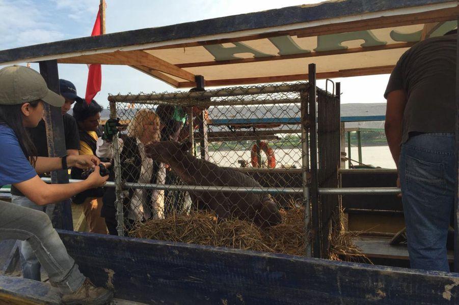 Cholita a retrouvé la liberté au Pérou