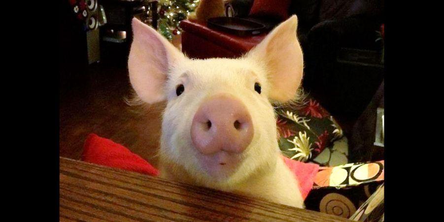 Esther la cochonne a bien grandi