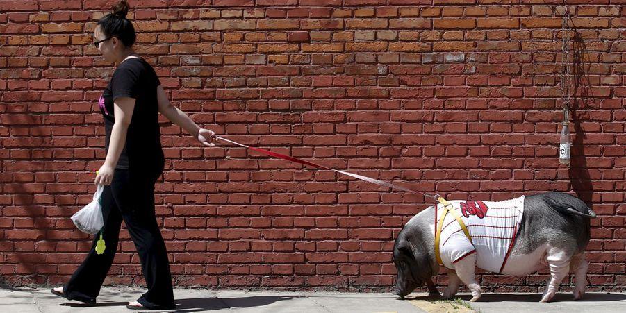 Zhu Roumeng et son cochon Wuhua à Pékin, en Chine