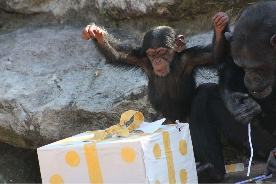 Des cadeaux par milliers pour les animaux dans les zoos