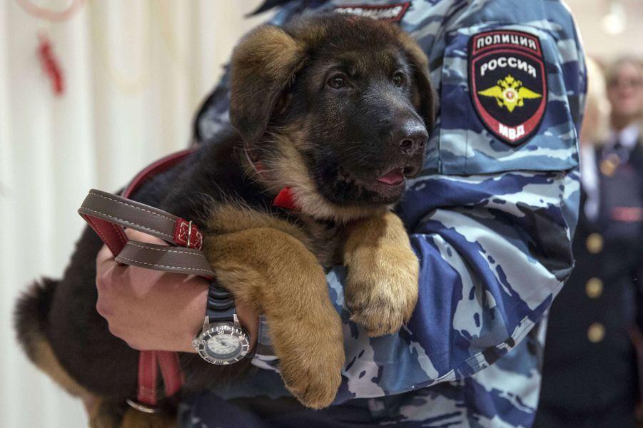 Dobrynya, le chiot offert par la Russie au Raid, est officiellement français