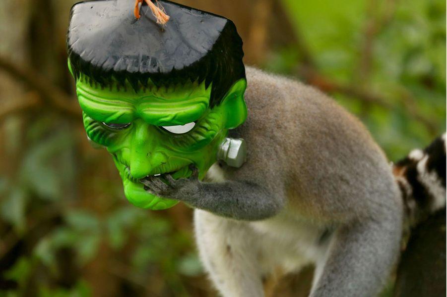 Drôles ou effrayants, les animaux sont prêts pour Halloween au ZSL Whipsnade Zoo