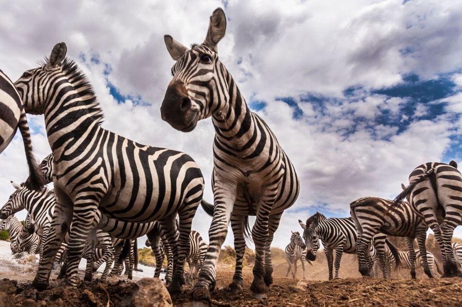 Embarquez avec les zèbres au Kenya