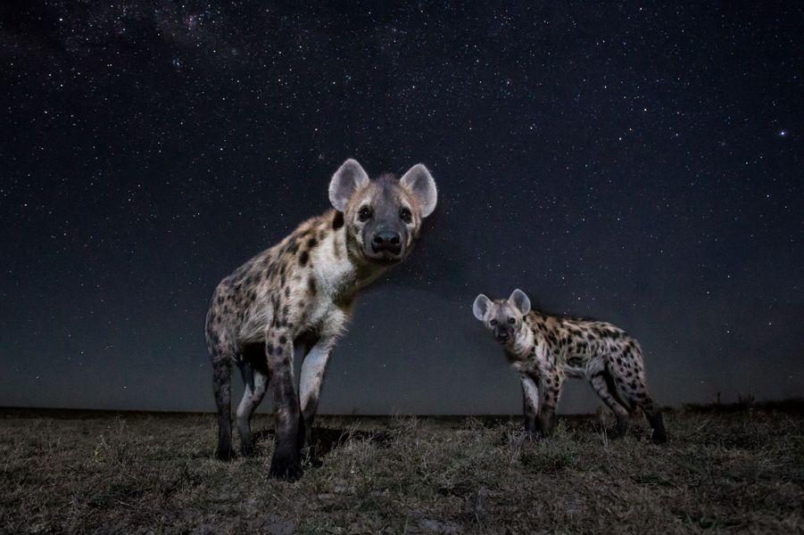Les images du photographe Will Burrard-Lucas en Zambie.