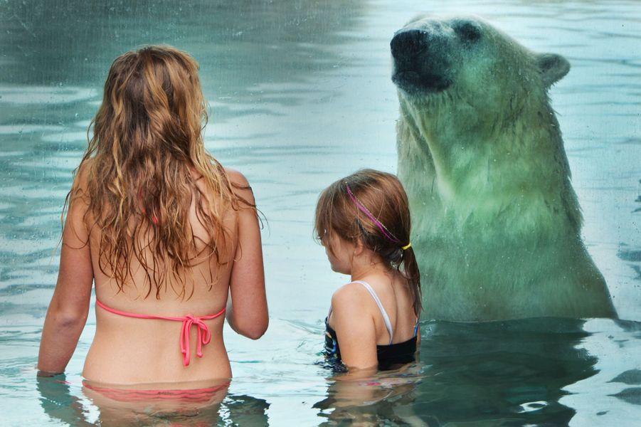 Face à face avec un ours blanc au Cochrane Polar Bear Habitat, un parc dédié aux ours polaires situés dans l'Ontario