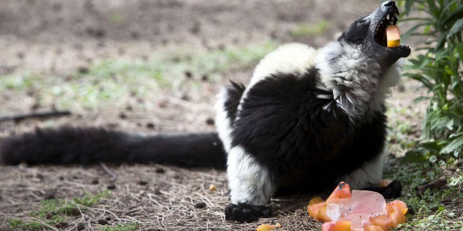 Le zoo de Tel Aviv a rafraîchi ses animaux