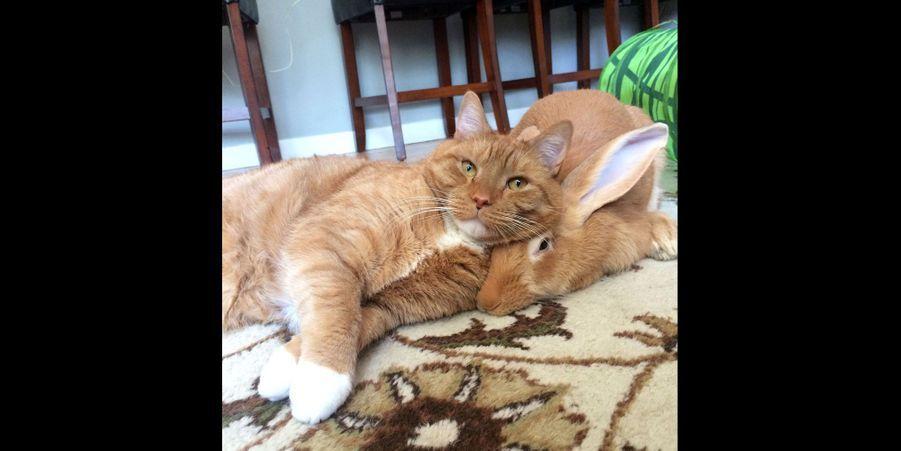 Gus le chat et Wallace le lapin, les inséparables
