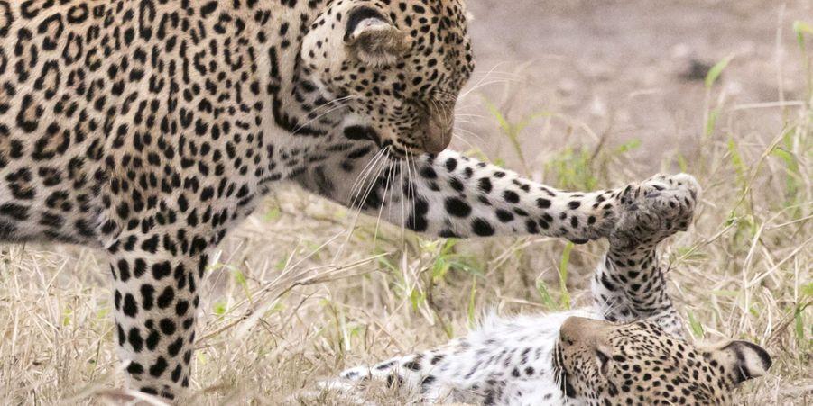 La mère et son petit, patte contre patte