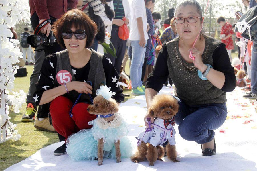 15 mariages de chiens ont été célébrés à Nanjing, en Chine