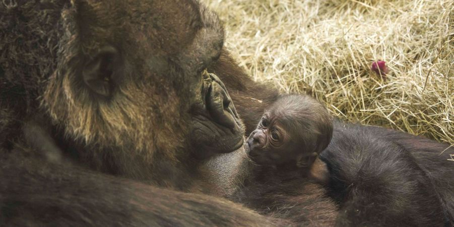 Mary et son petit gorille