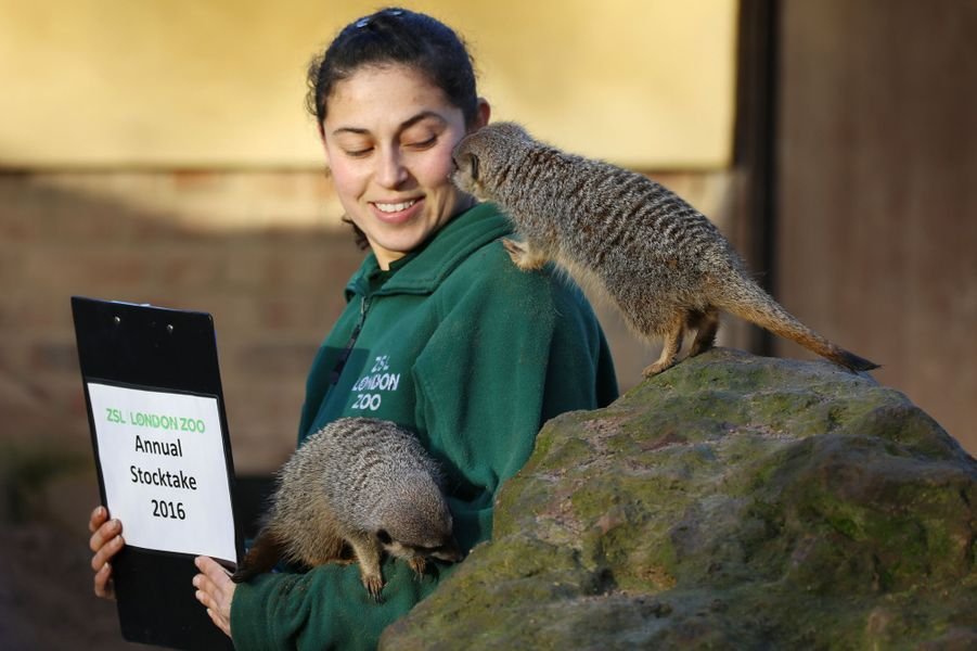 L'heure de l'inventaire a sonné au zoo de Londres
