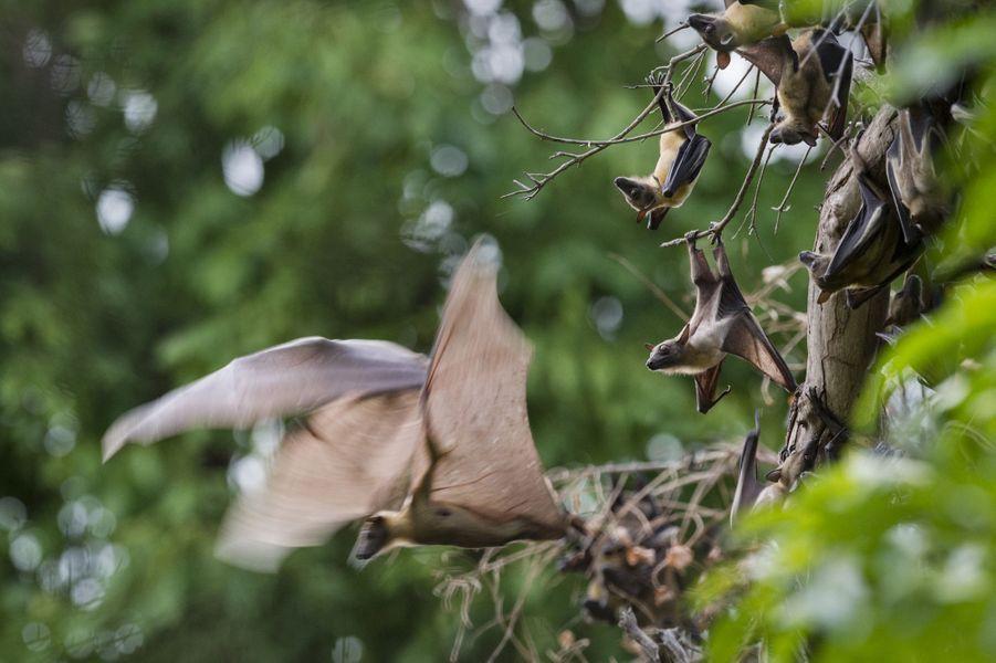 L'impressionnante migration des chauve-souris en Zambie