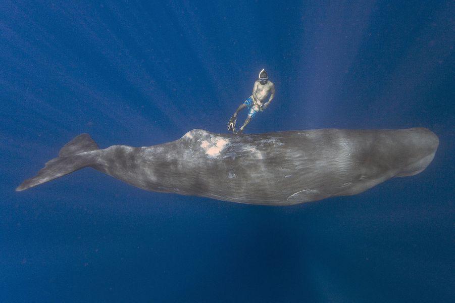 rencontres entre plongeurs 11 août 2015 en nouvelle-zélande, des plongeurs croisent la route d'orques des plongeurs ont fait une rencontre inattendue avec des orques alors qu'ils explique le ministère de la conservation, selon lequel entre 150 et 200 de ces.