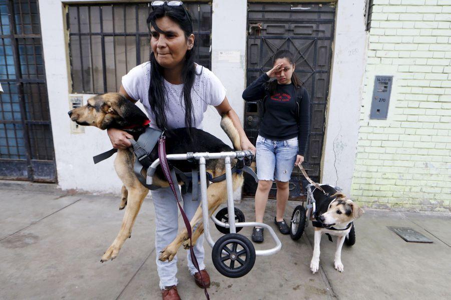 Au Pérou, la nouvelle vie des chiens paralysés