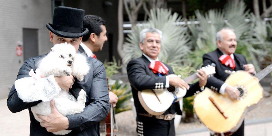 La quinceañera d'Angel le caniche a été organisée à Phoenix, dans l'Arizona
