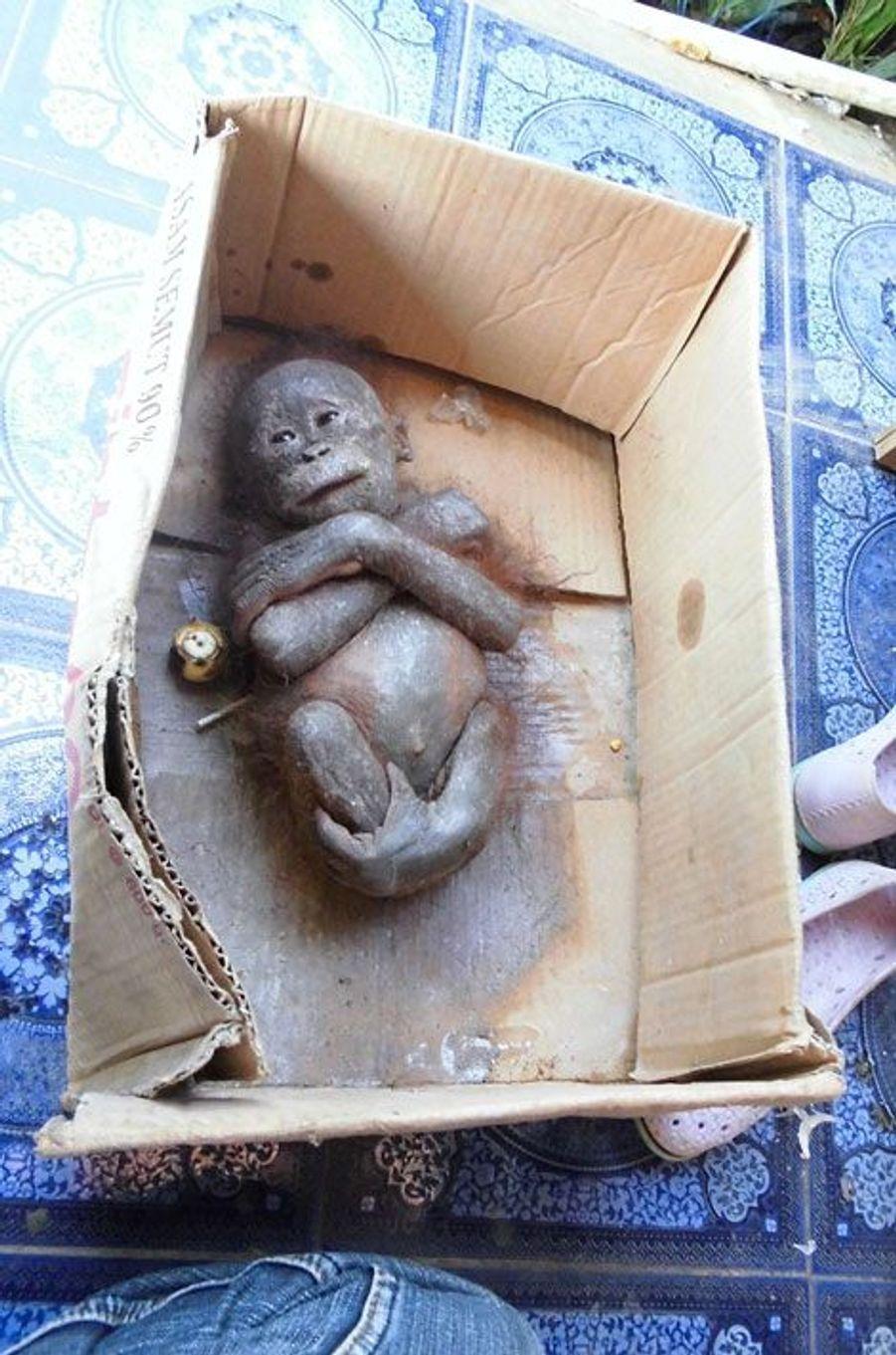 Laissé pour mort dans un carton, Gito s'accroche à la vie