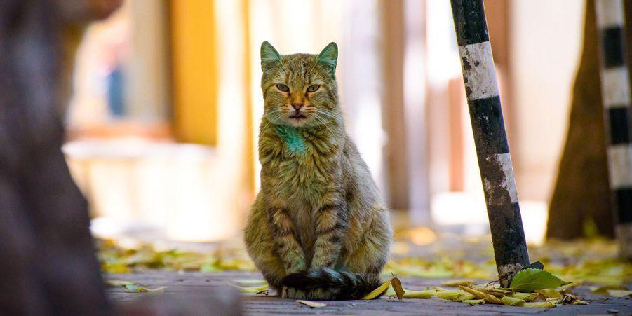 Le chat vert est devenu... jaune