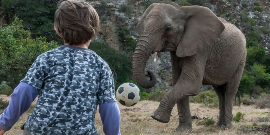 Partie de football entre un éléphant et un garçon