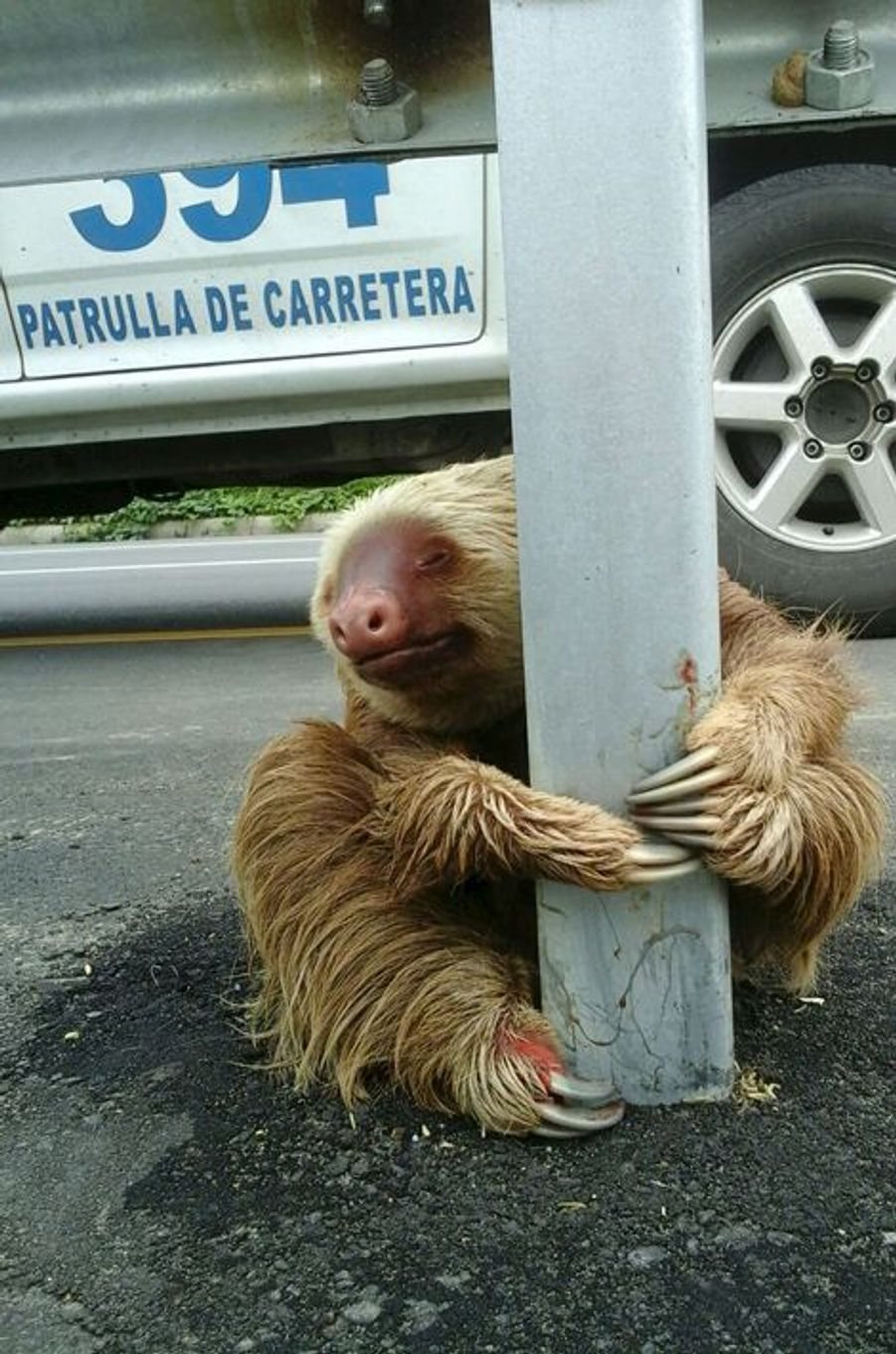 Le paresseux équatorien qui a conquis Internet