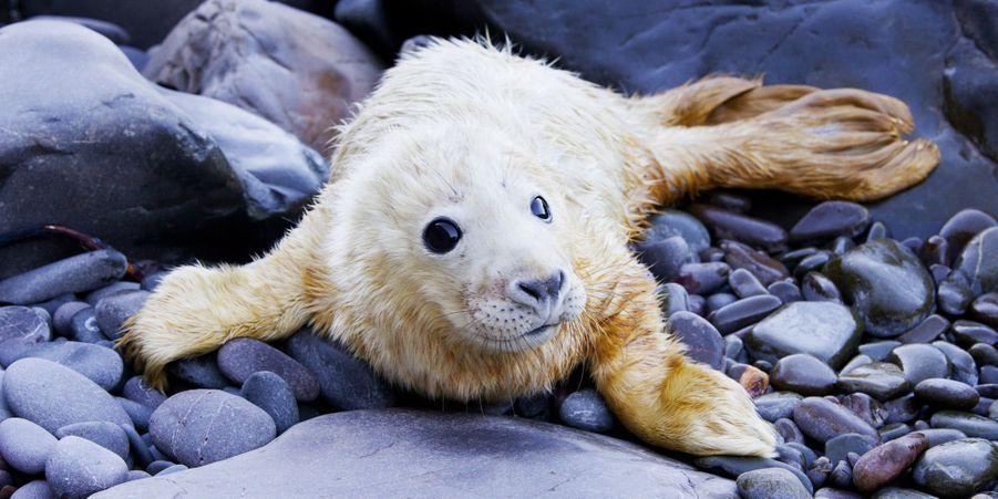 A peine né, ce petit phoque est déjà prêt pour les photos