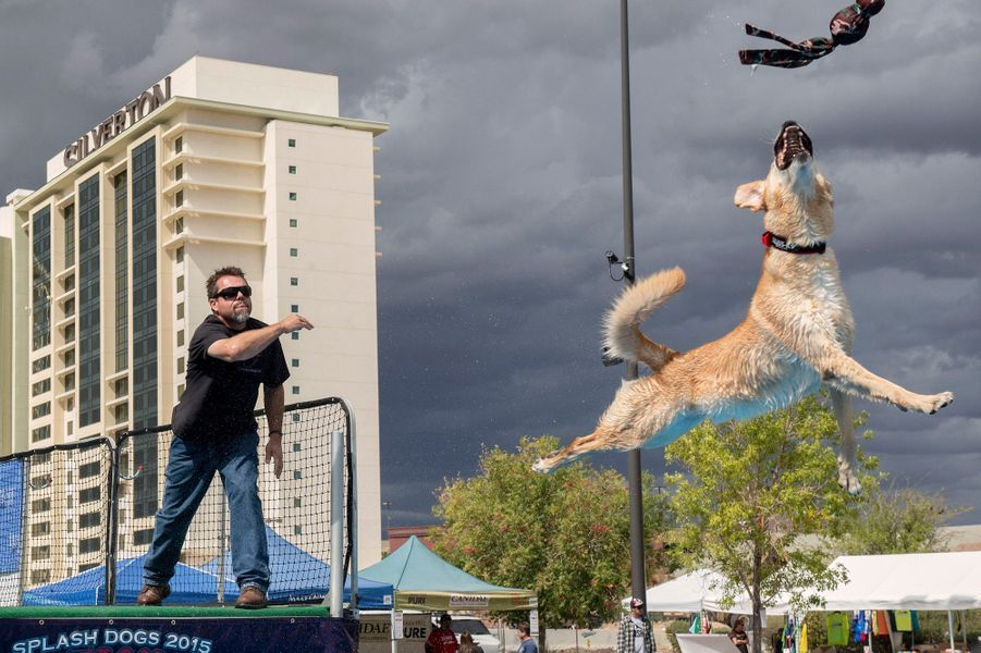 Les acrobaties des chiens volants à Las Vegas