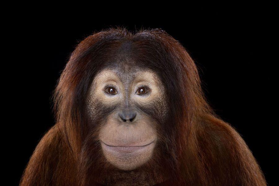 Les animaux dans l'objectif de Brad Wilson