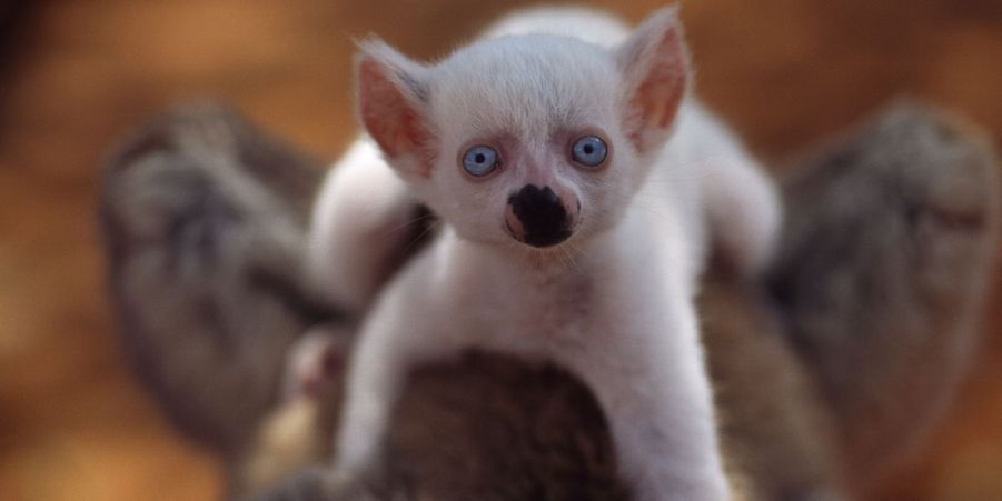 Les animaux eux aussi peuvent être albinos