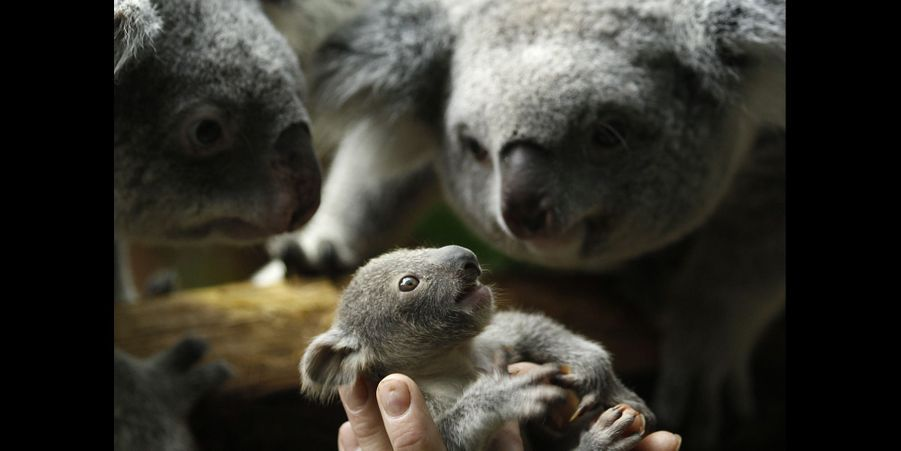 Les bébés animaux les plus craquants