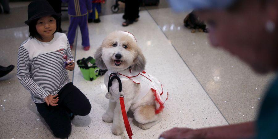 Les chiens antistress sont à la fête à l'aéroport de Los Angeles